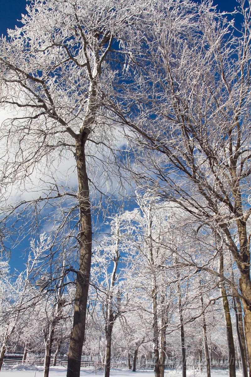 Frozen Niagara? (11)
