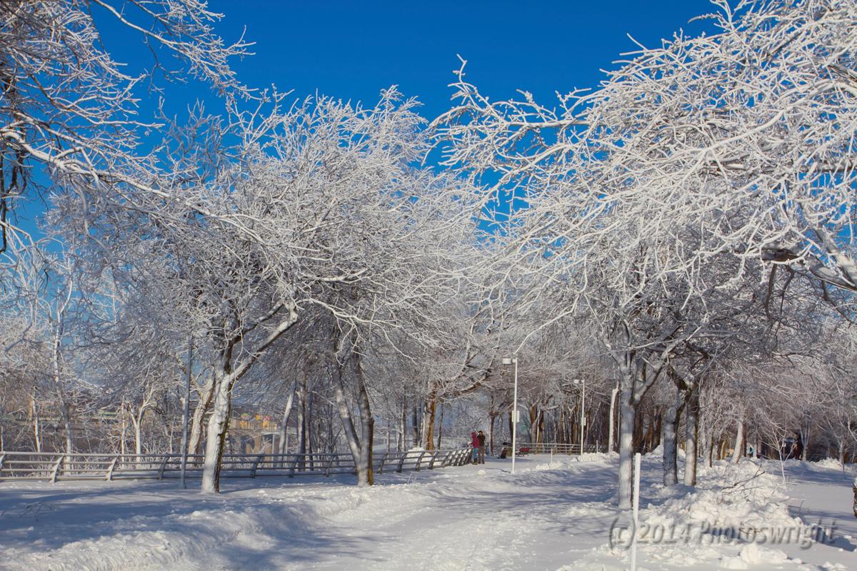 Frozen Niagara? (12)